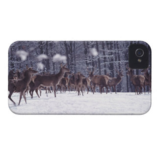 red deer Case-Mate iPhone 4 cases