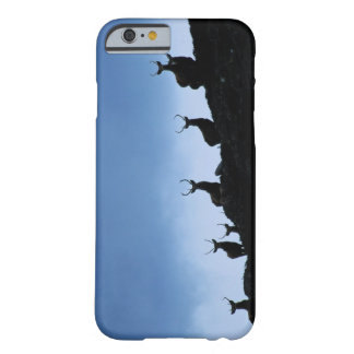 RED DEER (CERVUS ELAPHUS) SILHOUETTED AGAINST BARELY THERE iPhone 6 CASE