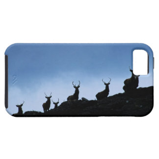 RED DEER (CERVUS ELAPHUS) SILHOUETTED AGAINST CASE FOR THE iPhone 5