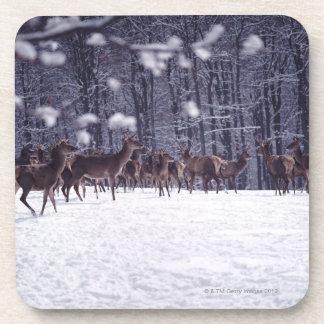 red deer coaster