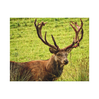 RED DEER DESIGN - A FINE LOOKING SPECIMEN! CANVAS PRINT