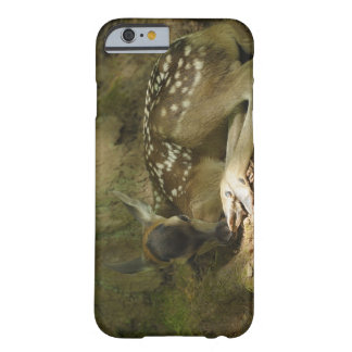 Red Deer Fawn in Forest, Germany Barely There iPhone 6 Case