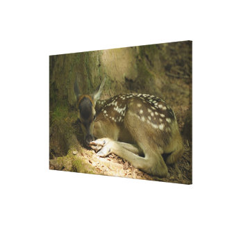 Red Deer Fawn in Forest, Germany Canvas Print