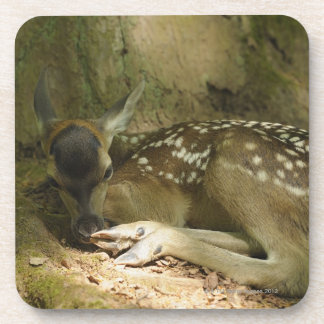 Red Deer Fawn in Forest, Germany Drink Coaster