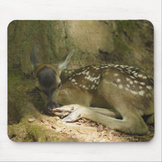 Red Deer Fawn in Forest, Germany Mouse Mat