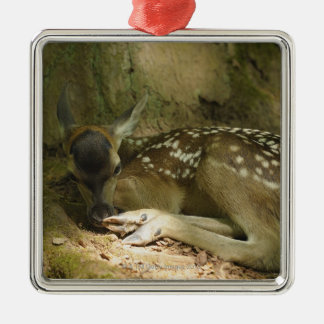 Red Deer Fawn in Forest, Germany Silver-Colored Square Decoration