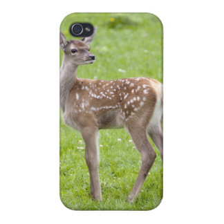 Red Deer Fawn iPhone 4 Speck Case