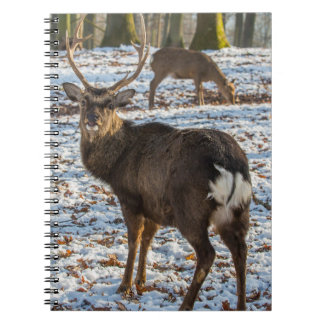 Red Deer in Snow Notebooks