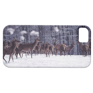 red deer iPhone 5 cases