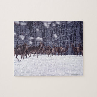 red deer jigsaw puzzle