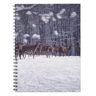 red deer notebook
