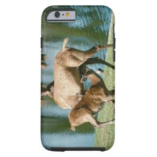 Red deer nursing offspring tough iPhone 6 case