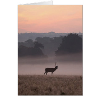 Red Deer Stag at Dawn - Greeting Card