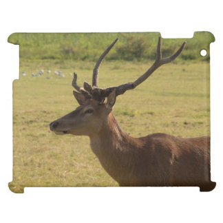 Red Deer Stag iPad Covers