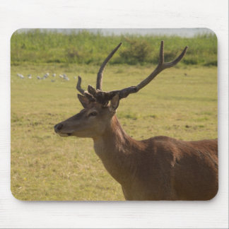 Red Deer Stag Mouse Pad