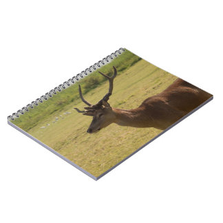 Red Deer Stag Notebook