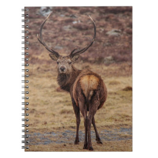 Red Deer Stag Notebook