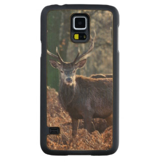 Red Deer Stag Portrait In Autumn Fall Winter Maple Galaxy S5 Case