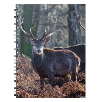 Red Deer Stag Portrait In Autumn Fall Winter Notebooks