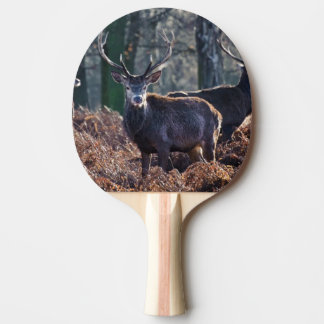 Red Deer Stag Portrait In Autumn Fall Winter Ping Pong Paddle