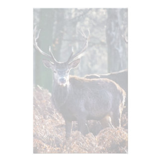 Red Deer Stag Portrait In Autumn Fall Winter Stationery