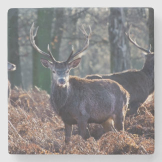 Red Deer Stag Portrait In Autumn Fall Winter Stone Coaster