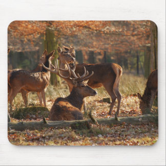 Red Deers In The Autumnal Wood Mouse Pad