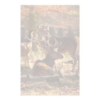 Red Deers In The Autumnal Wood Stationery