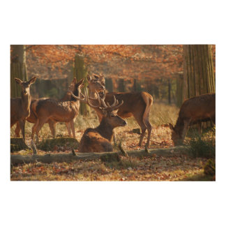 Red Deers In The Autumnal Wood Wood Wall Art