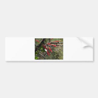 Red Desert Flower Petals Bumper Sticker