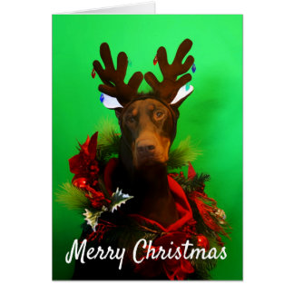 Red Doberman Christmas card