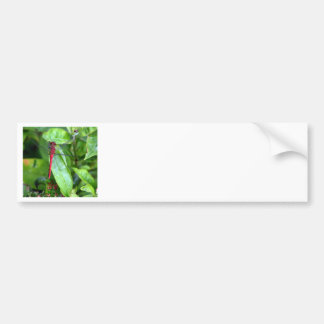 red Dragonfly Garden Bumper Sticker