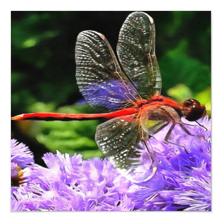 Red Dragonfly on Violet Purple Flowers Magnetic Invitations