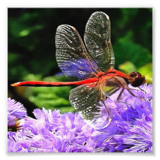 Red Dragonfly on Violet Purple Flowers Photo