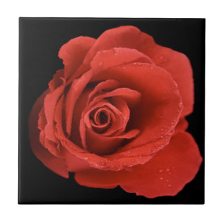 Red Drama Rose Tile