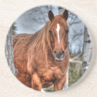 Red Dun Ranch Horse Animal-lover Photo Beverage Coasters