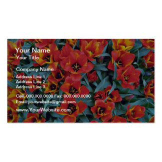 Red Dwarf Tulips flowers Business Cards