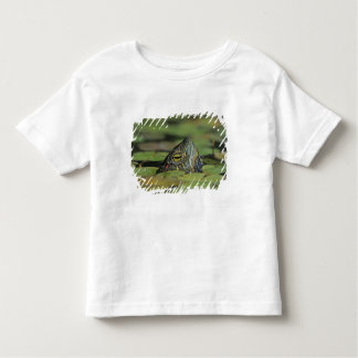 Red-eared Slider, Trachemys scripta elegans, Toddler T-Shirt