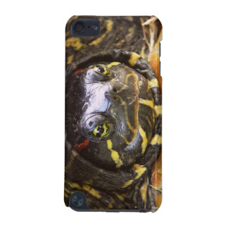 Red Eared Slider Turtle Head iPod Touch (5th Generation) Cases
