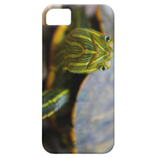 Red-eared Slider Turtle Head-on View Barely There iPhone 5 Case