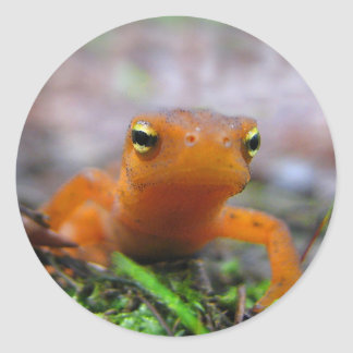 Red Eft Classic Round Sticker