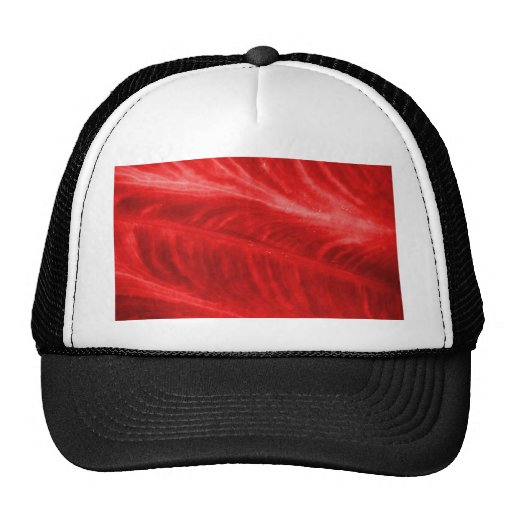 Red Elephant Ear Texture Hat