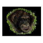 Red eye monkey postcard
