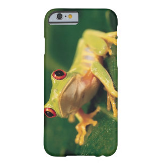 Red eye tree frog barely there iPhone 6 case