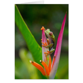 Red-eye tree frog, Costa Rica 2 Card