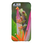 Red-eye tree frog, Costa Rica 2 Barely There iPhone 6 Case
