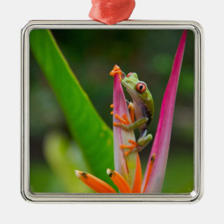 Red-eye tree frog, Costa Rica 2 Christmas Ornament