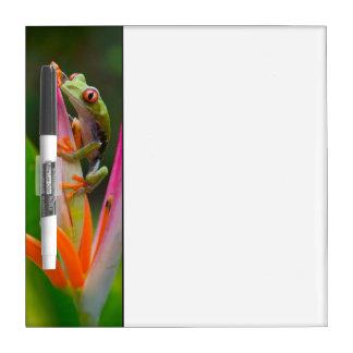 Red-eye tree frog, Costa Rica 2 Dry Erase Board