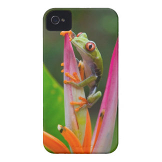 Red-eye tree frog, Costa Rica 2 iPhone 4 Case