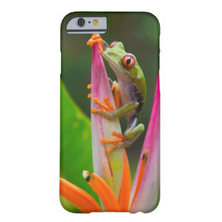 Red-eye tree frog Costa Rica 2 iPhone 6 Case